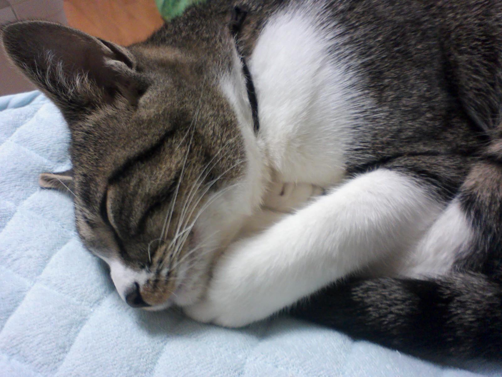 眠いニャン